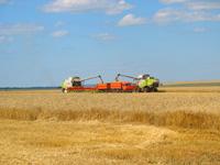 уборка зерновых на полях агрохолдинга ЭКСИМА