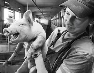 проблемы свиноводства в России ВТО
